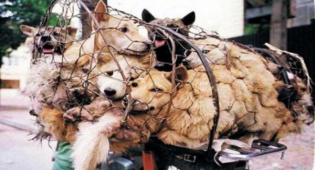 Le belle notizie che ci piace darvi - Il più grande mercato della carne di cane in Corea del Sud (2 milioni di animali ammazzati ogni anno!) chiude: diventerà un parco pubblico...!