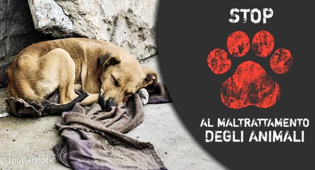 Maltrattamento di animali: che cosa fare e come denunciare crudeltà nei confronti degli animali...