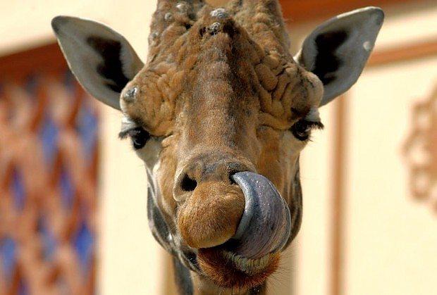 10 curiosità sugli animali