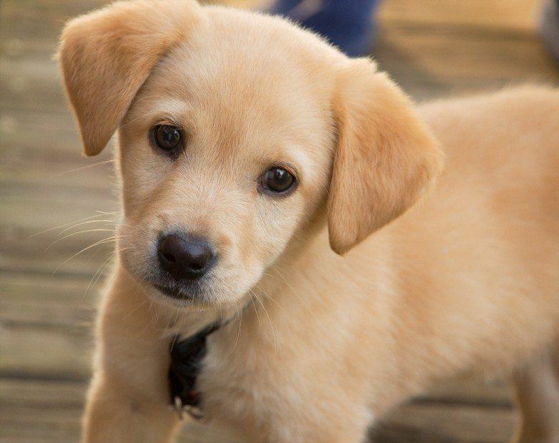 20 curiosità sui cani