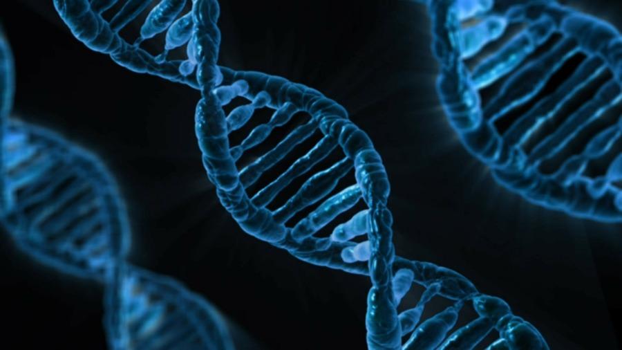 Bellezza, tutta questione di DNA.