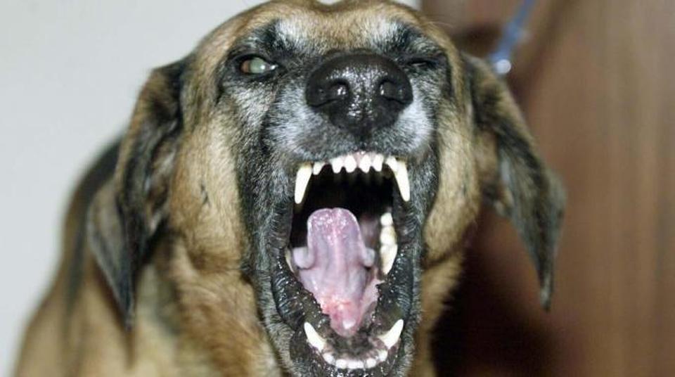 Danni derivanti da mancata custodia dell'animale pericoloso