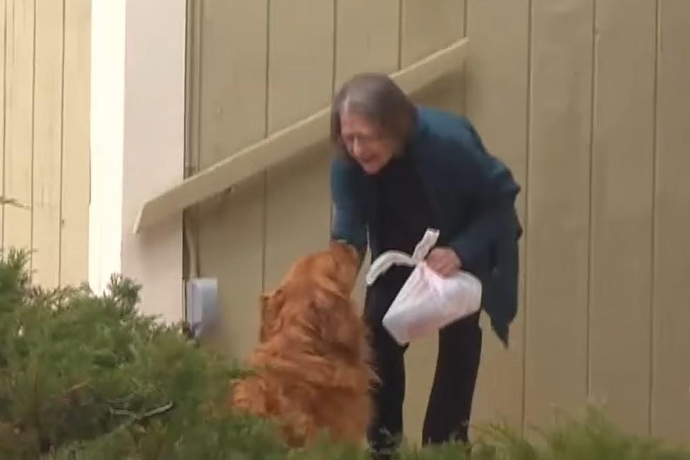 Coronavirus, il cane che consegna la spesa ai vicini più deboli che non possono uscire di casa