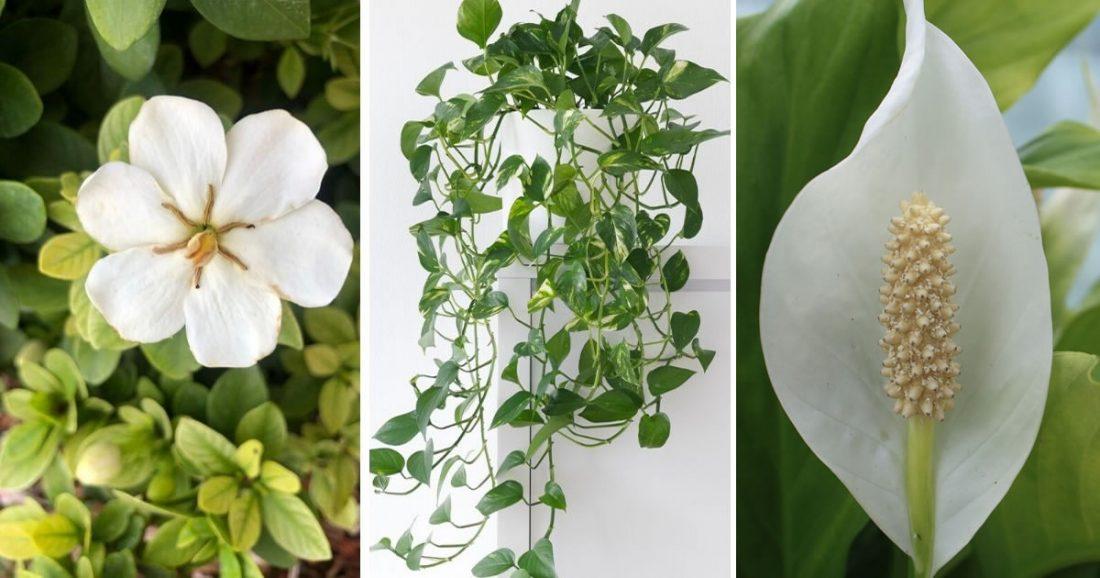 8 piante da mettere in camera da letto per stimolare il sonno e decorare