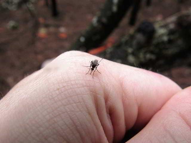 Punture di zanzare: i migliori rimedi da utilizzare